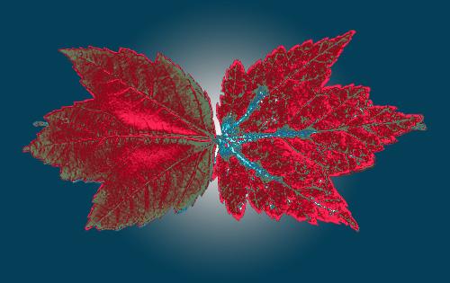 OBJ 1 - 2 Red Leaves - 500 PPI